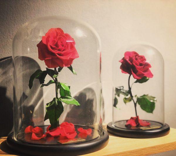 Hoa hồng vĩnh cửu đỏ