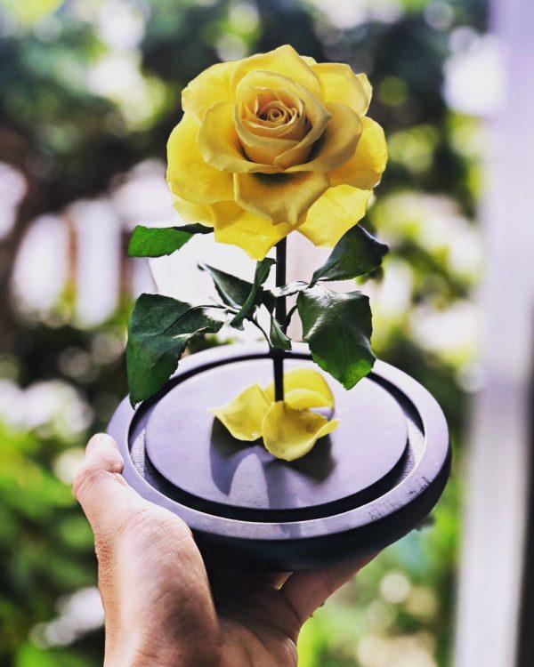Hoa hồng vĩnh cửu vàng